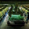 Colorado Recreational Pot Prices Expected To Fall Fast This Year