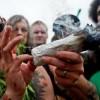 Majority Of Americans Support Marijuana Legalization