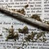 Indiana Church Plans Marijuana Smoking Worship Service