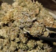 Chile moves to legalize marijuana