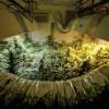 Unlicensed Marijuana Stores Grow Like Weeds in LA