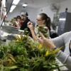 Colorado on Pace to Nearly Double Revenue from Marijuana Tax