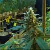 Oregon marijuana industry targets tourist market