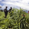 Mexico considers decriminalizing marijuana