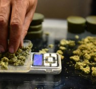 Could 2016 Be The Year Federal Law Derails The Cannabis Movement?