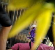 Bill proposes pesticide-free marijuana labeling program in Colorado