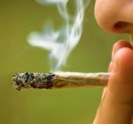 Twins study finds no evidence that marijuana lowers IQ in teens