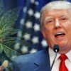 National DA group mobilizes to advise Trump on pot policy