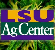 LSU searching for contractors to grow medical marijuana