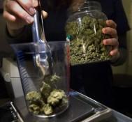 California seeks advisers on marijuana rules
