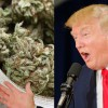 Trump Spokesman Says Administration 'Unlikely' to Crackdown on Legal Cannabis Industry