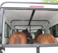 Marijuana found hidden in horse trailer