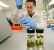 Testing of marijuana done in a legal vacuum