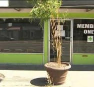 DEA letter leaves 23 area pot shops searching for new homes, tells pot shops to move away from schools or risk raids *VIDEO*