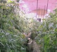 Italian Police seize 340kg of marijuana in abandoned Rome subway tunnel