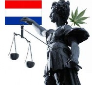 Marijuana sellers target stoner voters in Dutch election seeking to overturn crackdowns