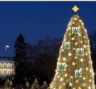 White House tree decked with marijuana?