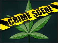 marijuana crime scene hbtv hemp beach tv