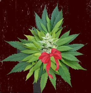 marijuana present hbtv hemp beach tv