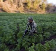 US drug legislation to slow Mexico violence?