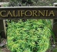 California Supreme Court rejects medical marijuana case