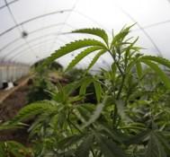 Oregon family uses medical marijuana to treat son's autistic rage