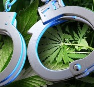 More People Are Arrested For Marijuana Than Violent Crimes