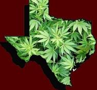 State representative files medical marijuana bill