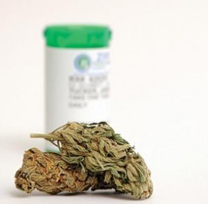1116-medical-marijuana hbtv hemp beach tv