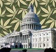 Medical marijuana in D.C. by April?