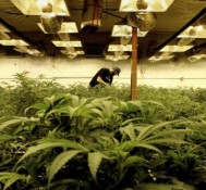 Bill legalizing medical marijuana surfaces in NC General Assembly