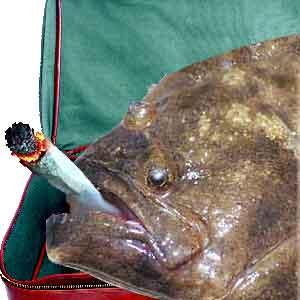 fish marijuana hbtv hemp beach tv