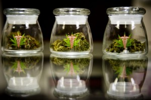 medical-marijuana-in-jars florida hbtv hemp beach tv