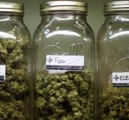 San Diego City Council to Consider New Medical Marijuana Ordinance