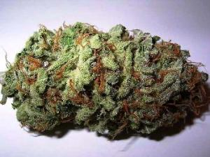marijuana bud hbtv hemp beach tv