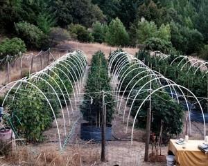 northern marijuana outdoor grow hbtv hemp beach tv