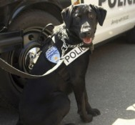 Cops train new dogs after marijuana legalization