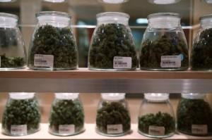 jars of marijuana cannabis hbtv hemp beach tv