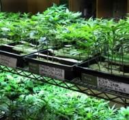 Pro-marijuana group ties legalization to Portland beer fest