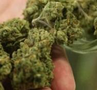 New Hampshire Legislature Approves Medical Marijuana