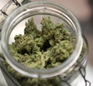 Mayors Vote Unanimously To End Federal Marijuana Crackdown