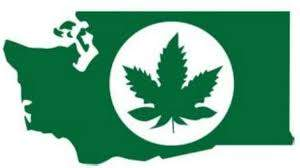 washington marijuana hbtv hemp beach tv