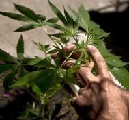The feds back off on marijuana