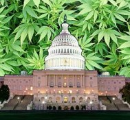 D.C. government program to subsidize pot for poor patients