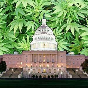 washington dc marijuana hbtv hemp beach tv