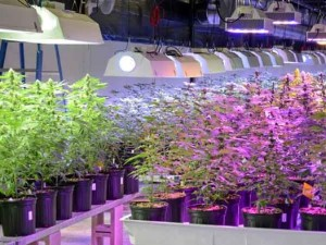 jersey marijuana hbtv hemp beach tv