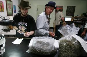 marijuana industry hbtv hemp beach tv