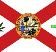 Medical marijuana easy to get under proposed Florida law, sheriff says