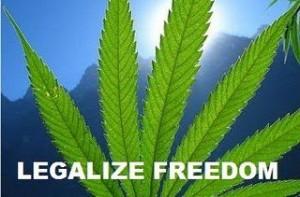 marijuana freedom hbtv hemp beach tv