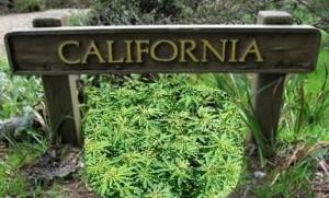 california marijuana hbtv hemp beach tv